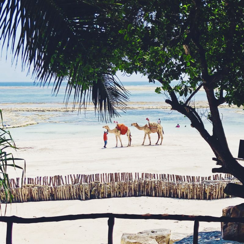 Diani Beach, Kenya: The Africa They Don't Show On T.V.